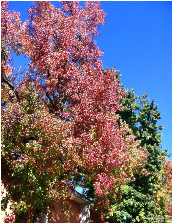 Chico Fall Colors
