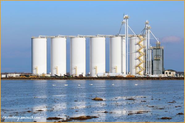 Rice towers