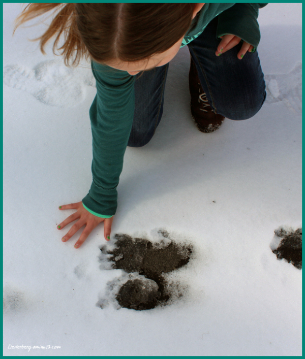 Bear print in the snow
