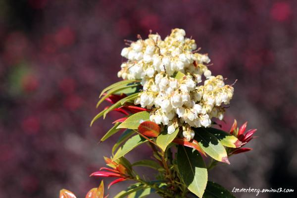Flowers at Stanford Inn