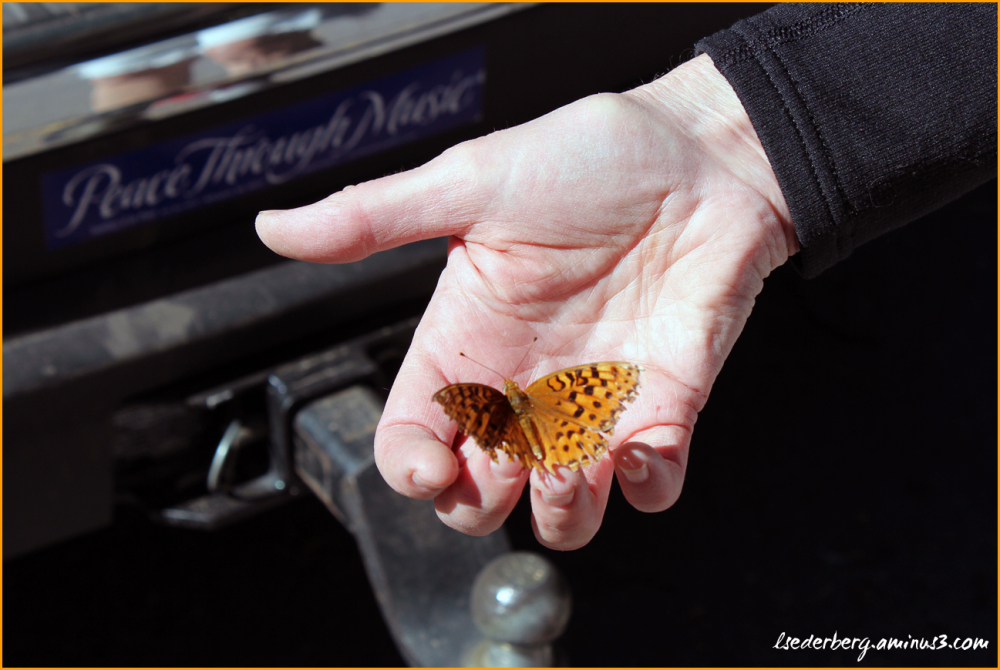 Butterfly from Deer Creek
