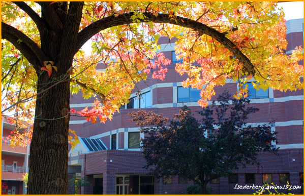 Chico Campus in fall 2