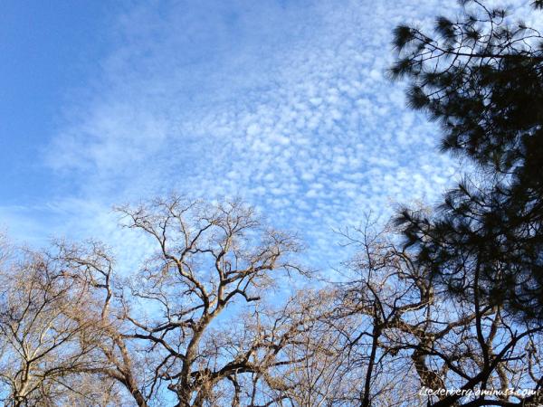 Sky on campus