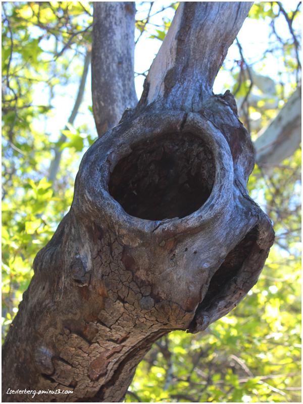 Knot-hole