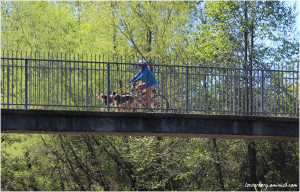 5-mile bridge