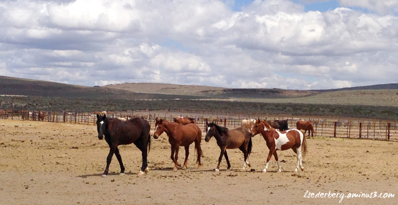 Mustangs all in a row