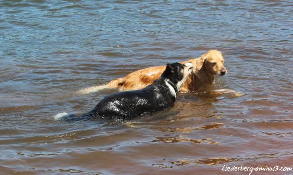 Two dog cousins