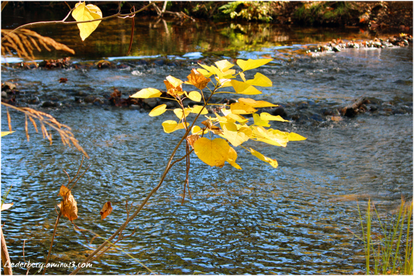 Fall Colors Park and creek