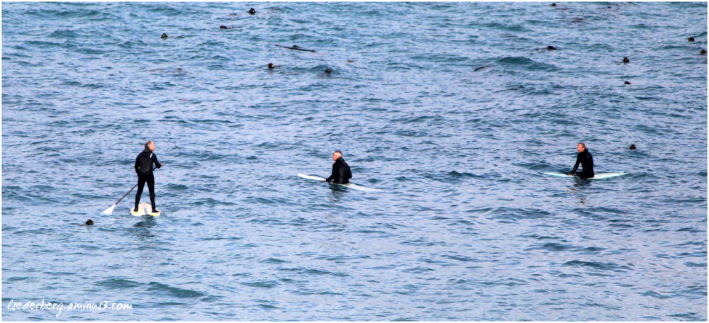 Two surfers, 1 paddle-boarder