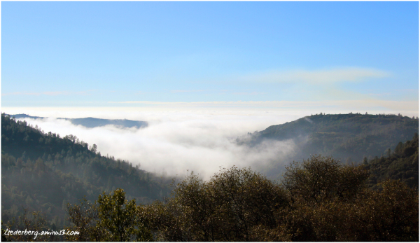 Chico fog