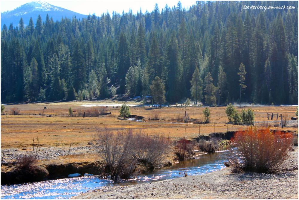 Deer Creek meadow