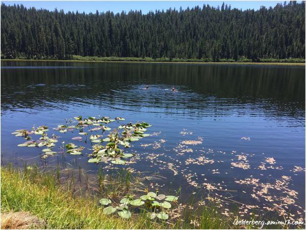 Willow Lake (2 of 4)