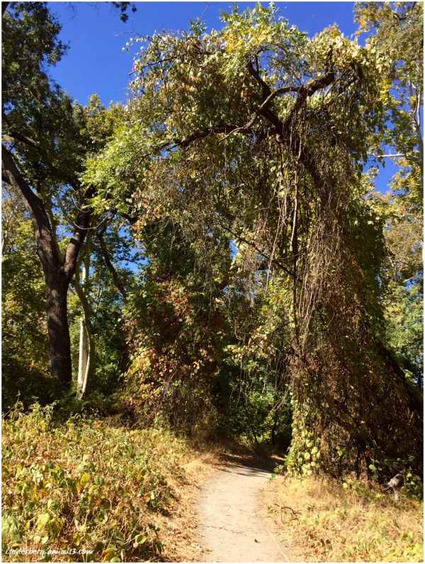 Trees in Park and Trail