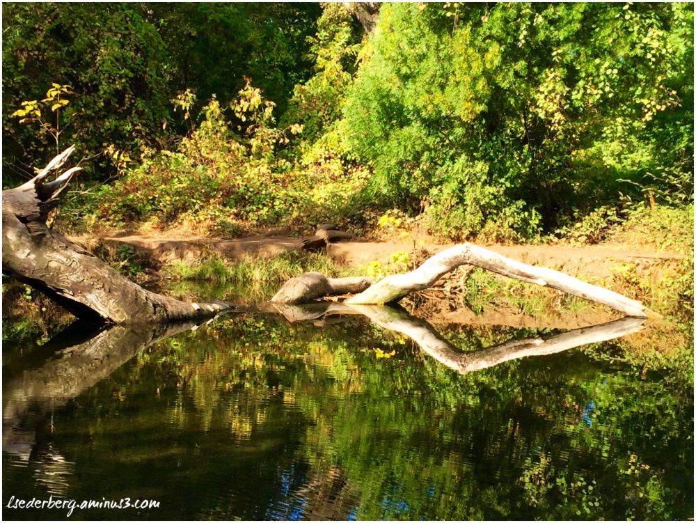 Chico Creek
