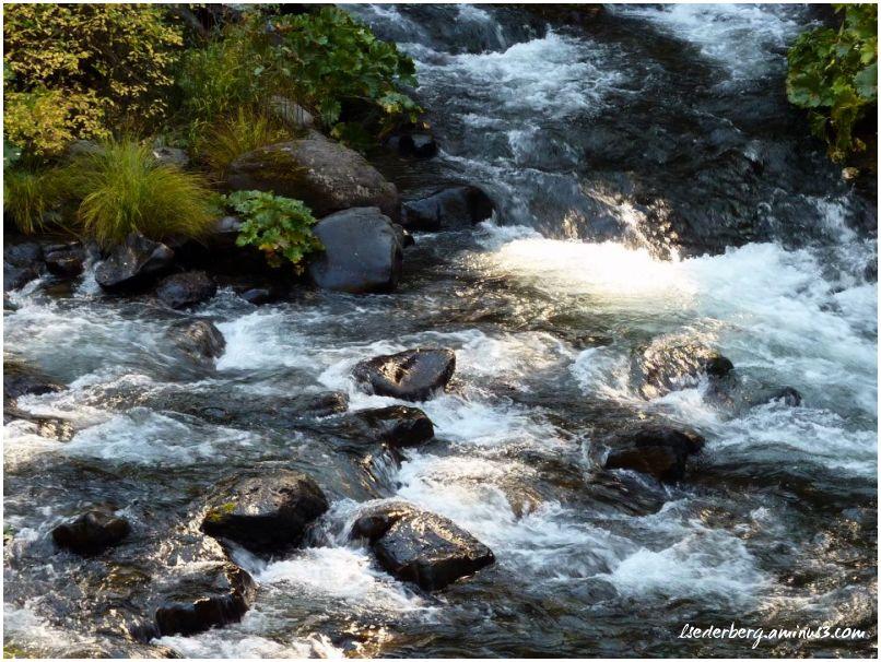 Serene Deer Creek