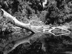 Chico Creek watering hole