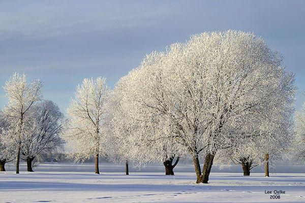 hoar frost, rime