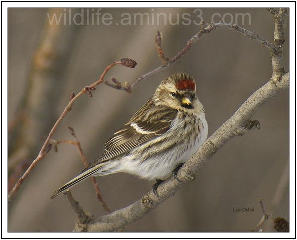 Wildlife, Nature, Landscape, Animal, Bird