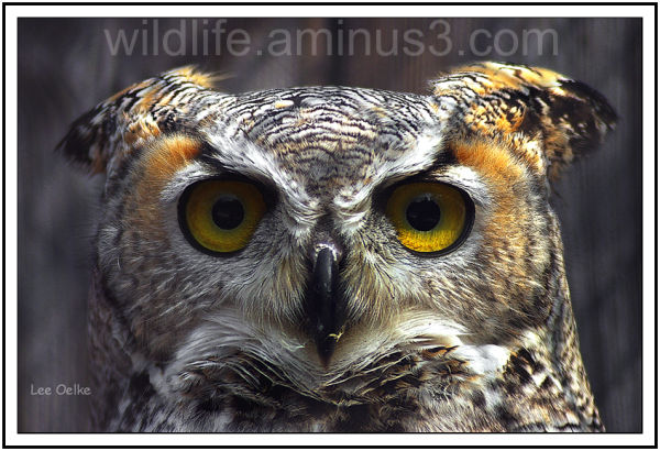 Wildlife, NAture, Landscape, animal, bird.