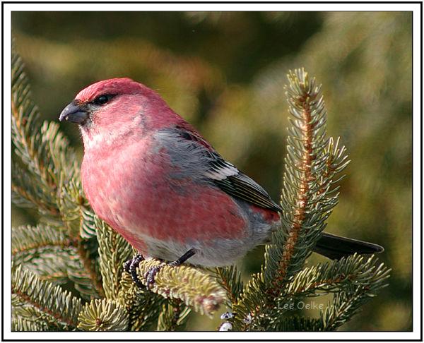 Wildlife Nature Landscape Animal Bird Photo