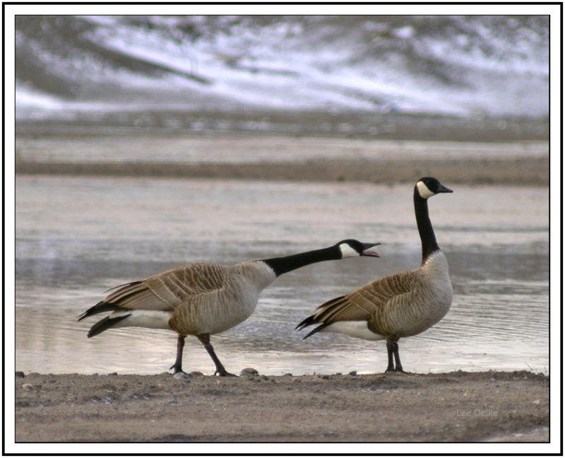 Wildlife Landscape Nature Animal Bird Photo