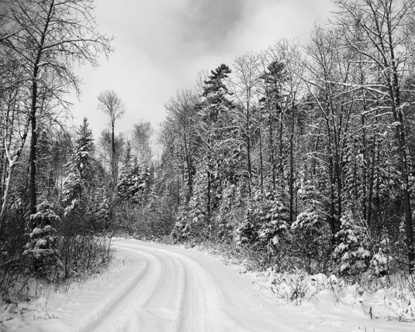 Winter Bush Road