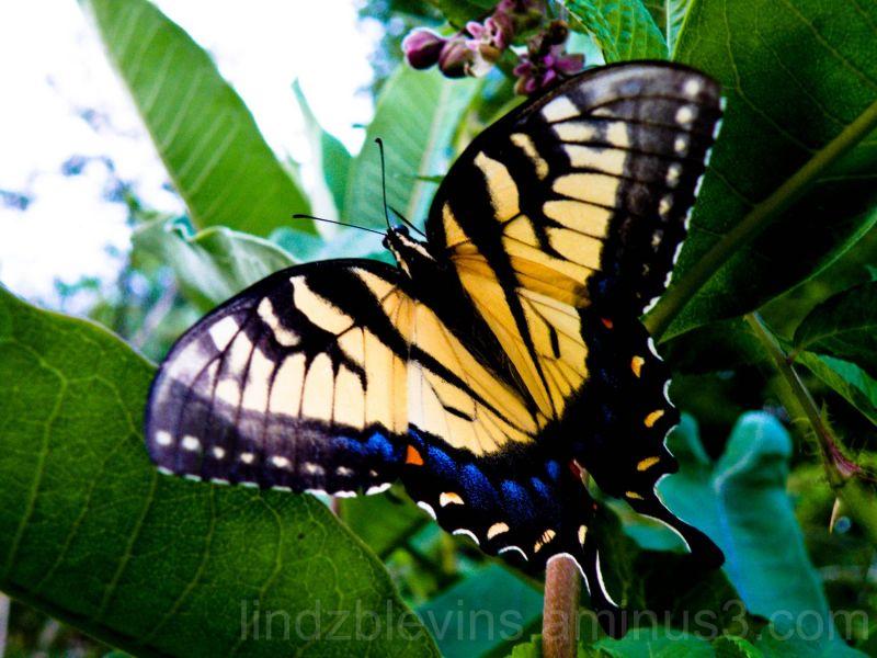 Float like a Butterfly...