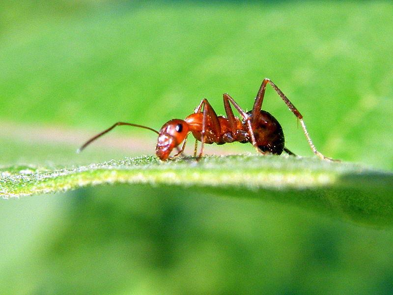 Little Ant Big World