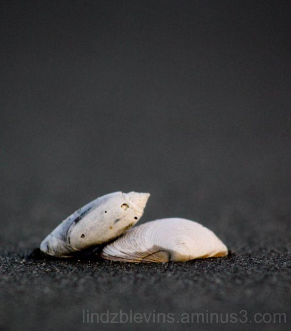 Sea Shell at the Sea Shore.