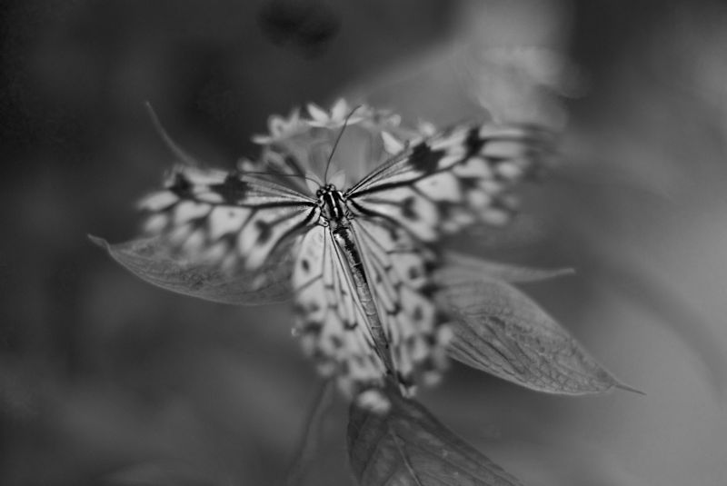 More butterfly....
