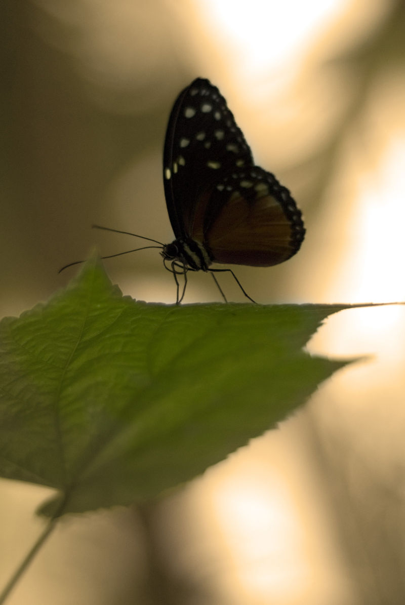 More Butterfly
