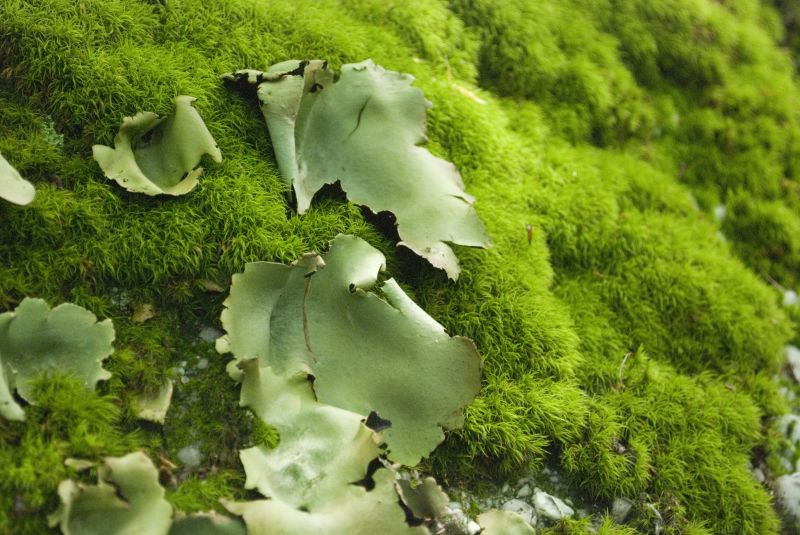 Lichen at Rock City