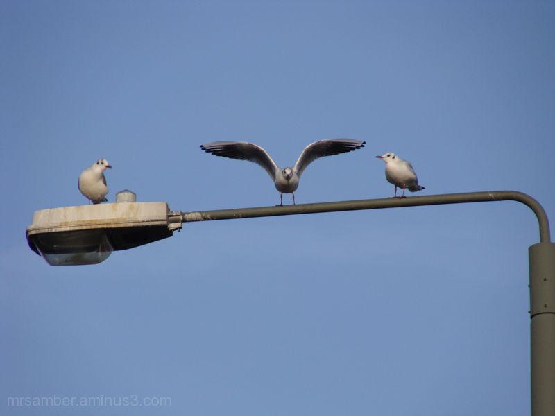 Seagulls Taking Refuge