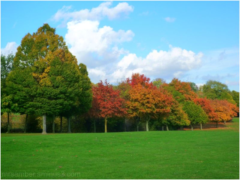 Autumn in Croydon