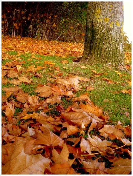 Autumn Walk Home