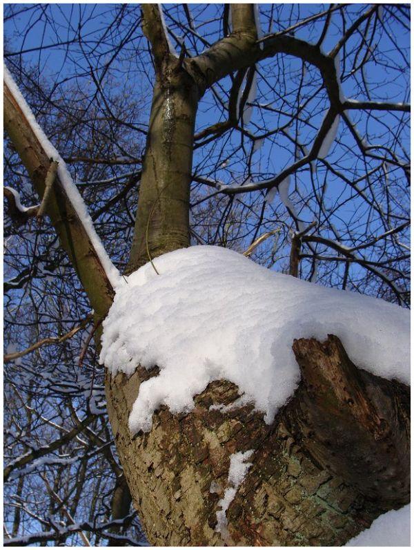 Snowy Scenes #1