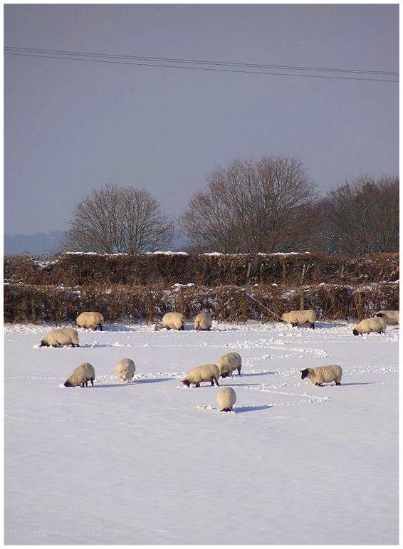 Snowy Scenes #2