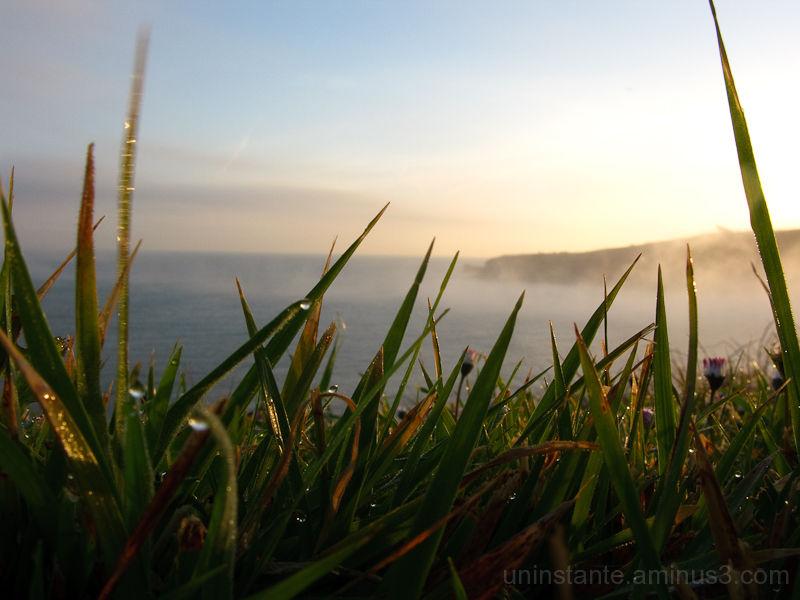 macro hierba amanecer