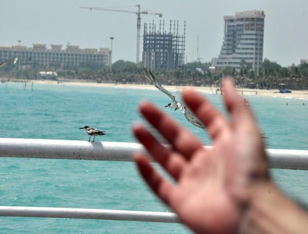 پرواز را به خاطر بسپار پرنده رفتنی است