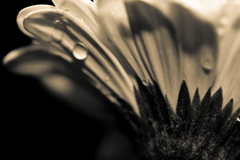 Flower - Monochrome 2