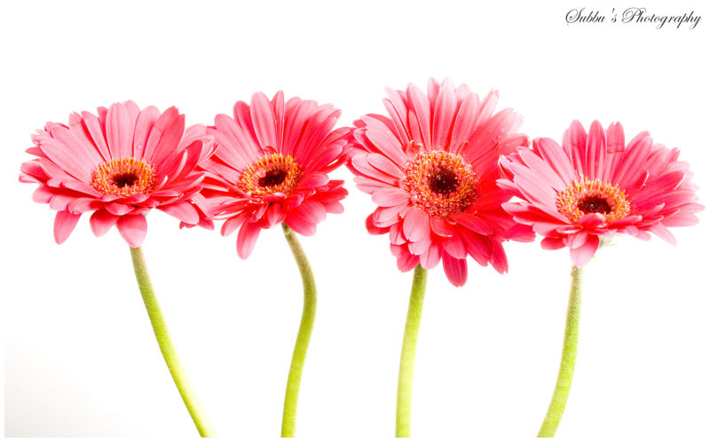 Flowers - I