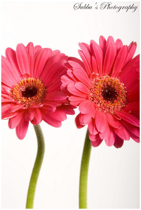 Flowers - III