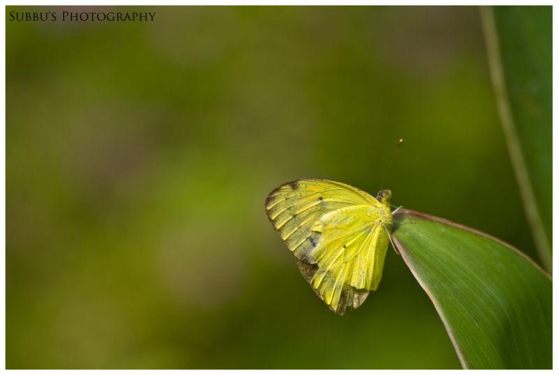 Butterfly Park - 6