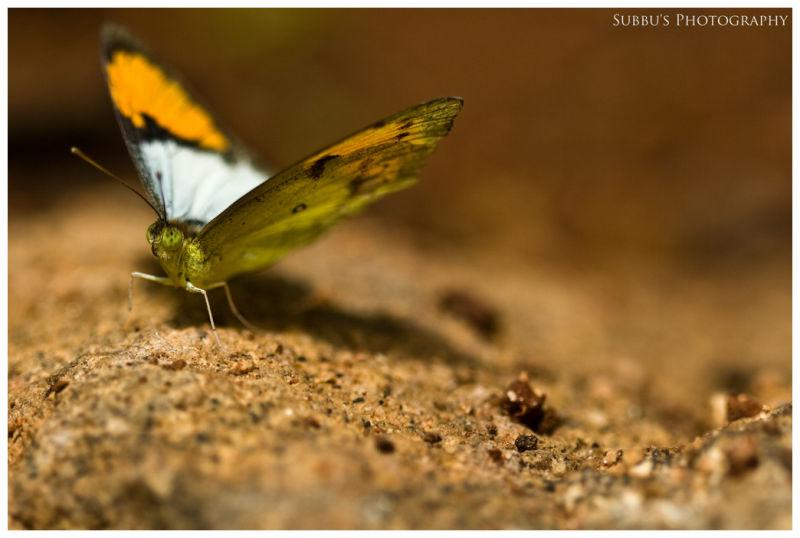 Butterfly Park - 8