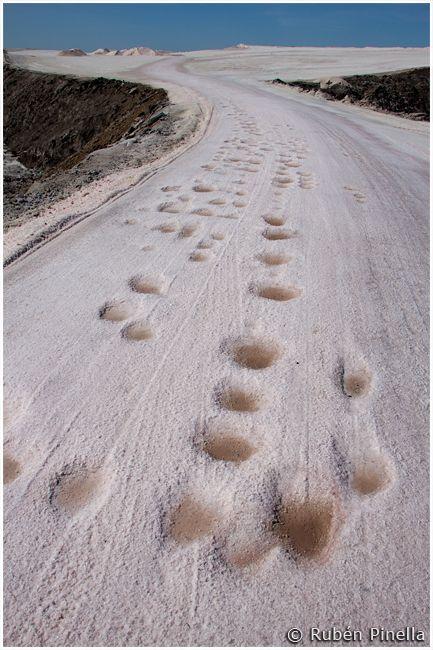 Camino de sal