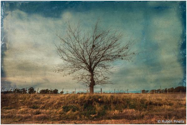 Árbol #42