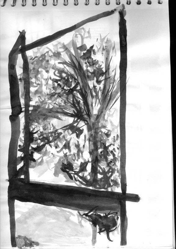 Sketch of a tree through my window
