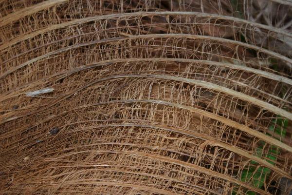 Palm Fibers