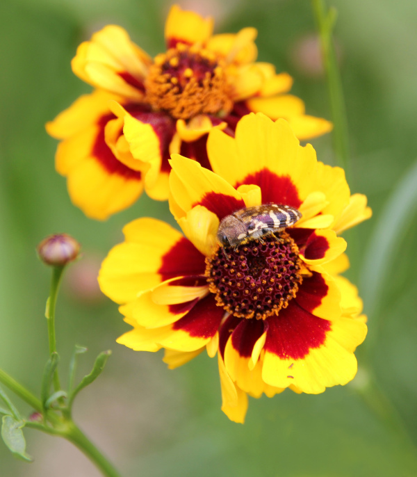 Flower and bug
