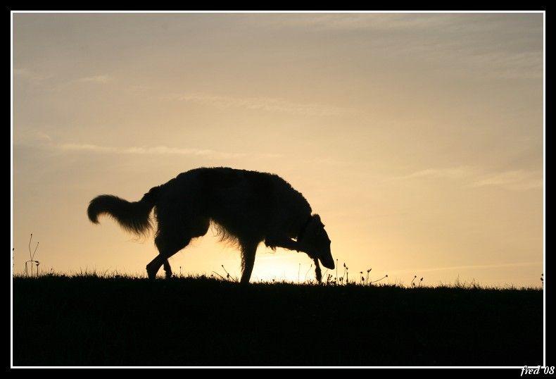Noureiev en contre jour devant le soleil levant